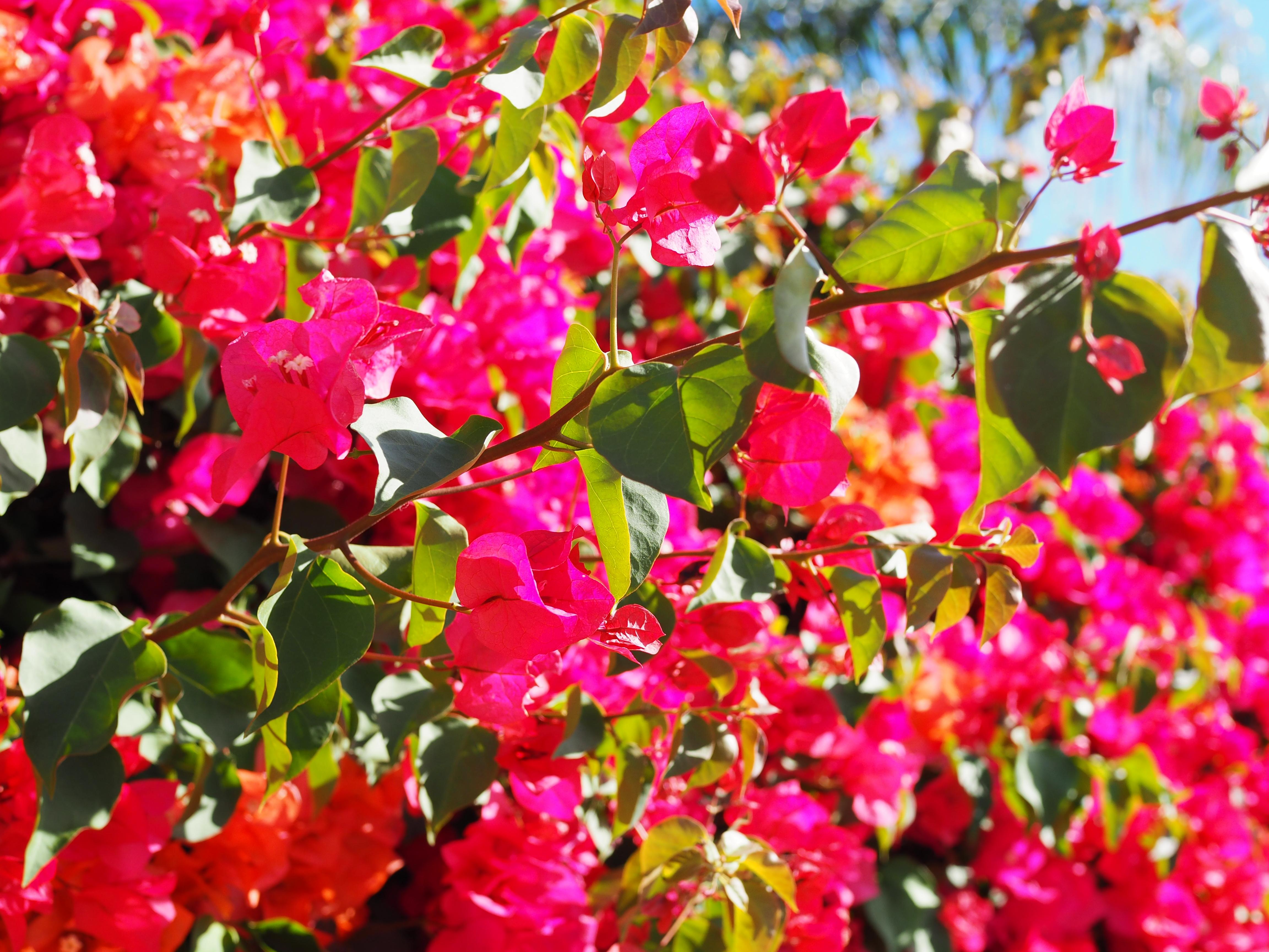 Kauniita kukkia oli runsaasti!