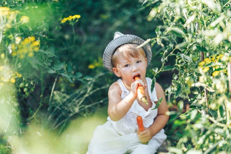 Vegaani lapsi syö porkkanaa luonnossa.