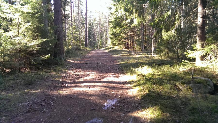 trail run porvoo