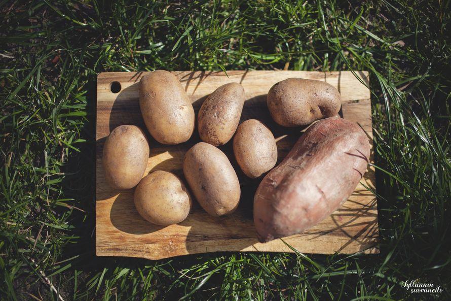 Aloitin pesemällä ja pilkkomalla perunat ja bataatit.