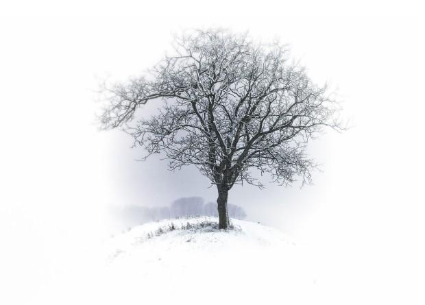 tree-530324_1280