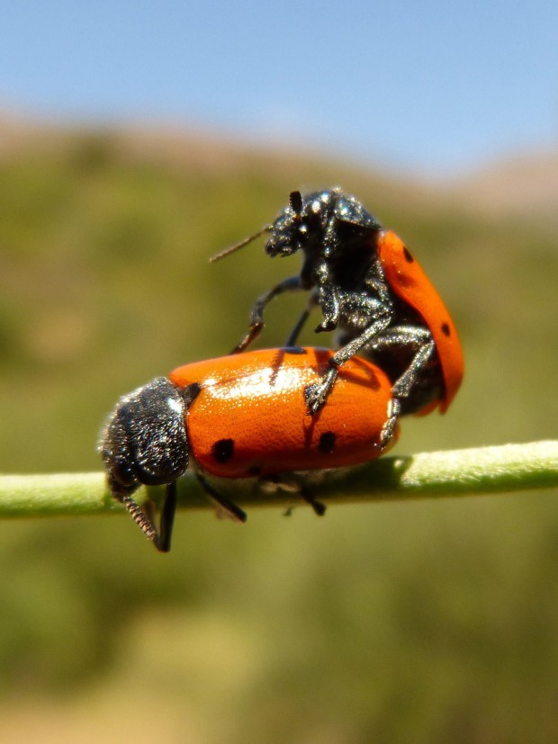 ladybug-911679_1280