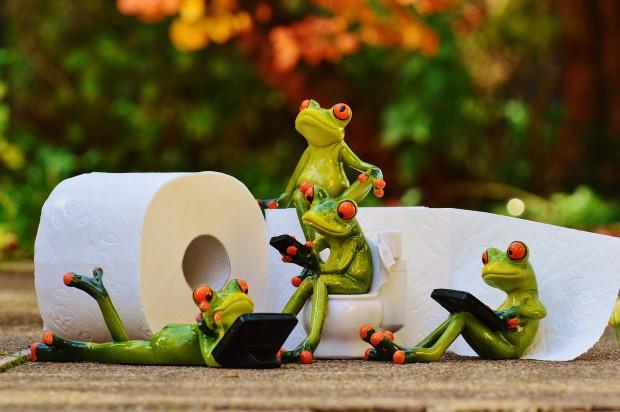 frog-1037253_1920