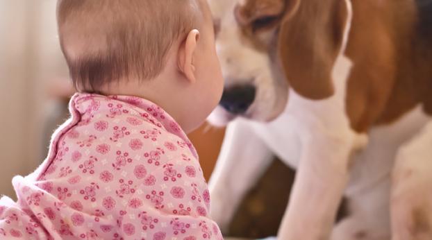 Vauva tulossa koiraperheeseen