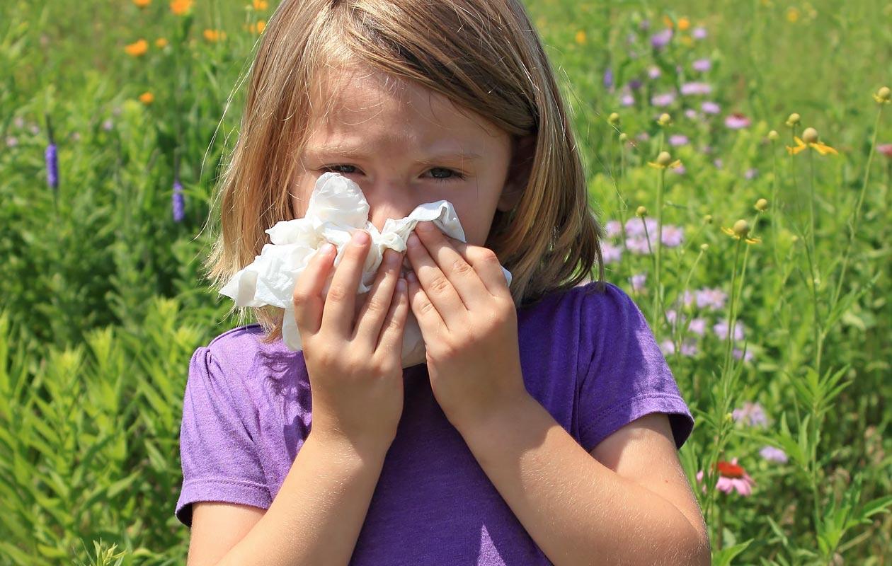 Hoida hyvin lapsen siitepölyallergia