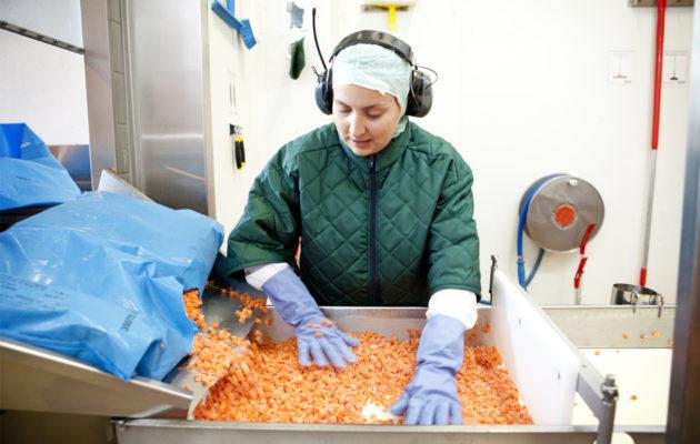 Sorttaaja Kristiina Iironen katsoo, ettei porkkanoiden joukossa ole mitään ylimääräistä.