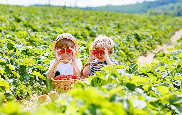 Vaikeuksia keksiä edullista tekemistä lasten kanssa kesällä? Katso vinkkimme!