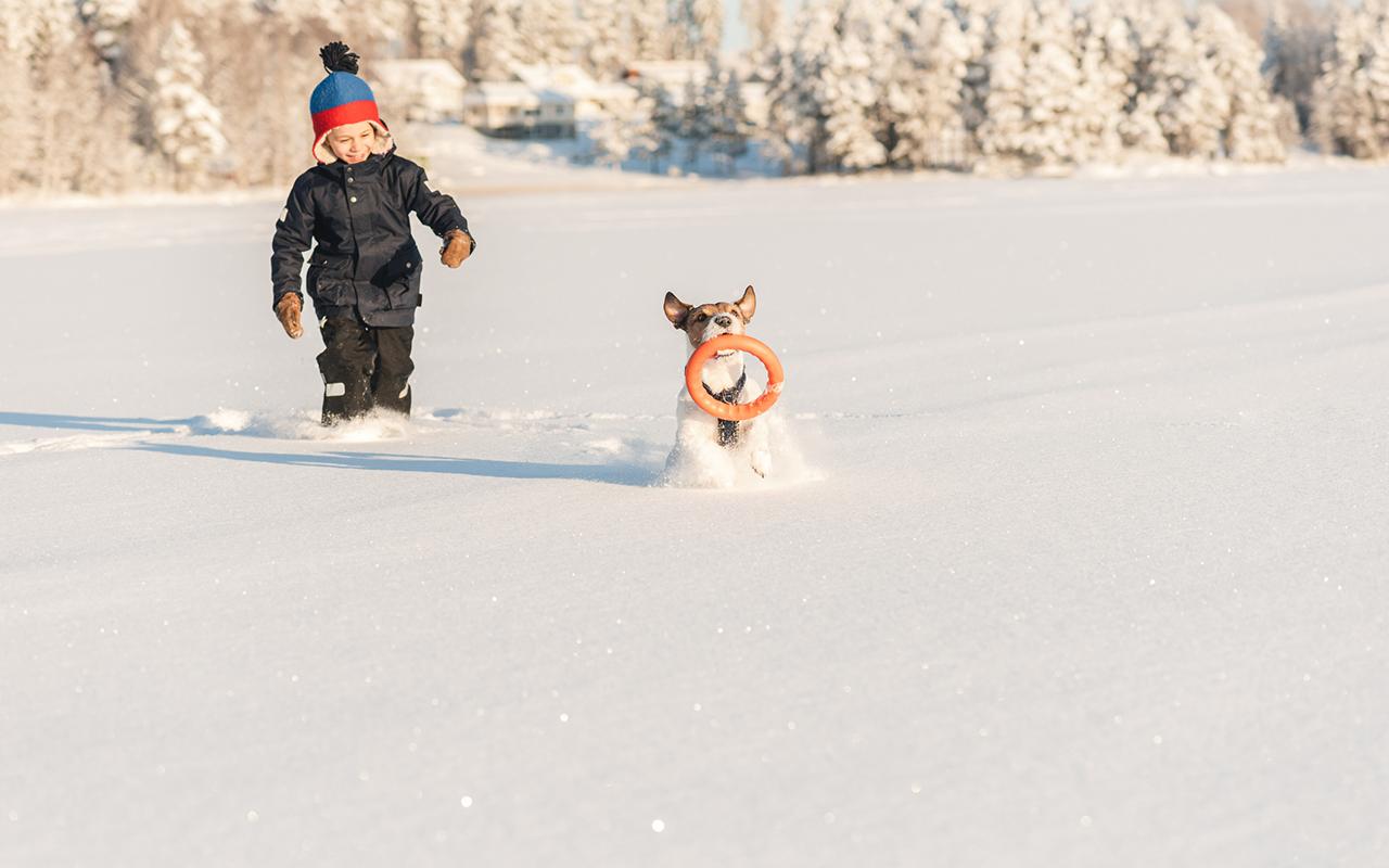 Koira lapsiperheeseen   Lasten ja koiran yhteiselo voi olla hyvinkin palkitsevaa.
